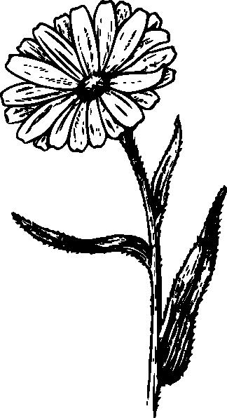 free vector Calendula clip art