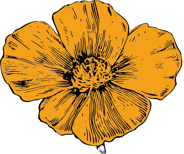 California vector. Poppy clip art free