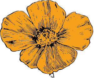 free vector California Poppy clip art