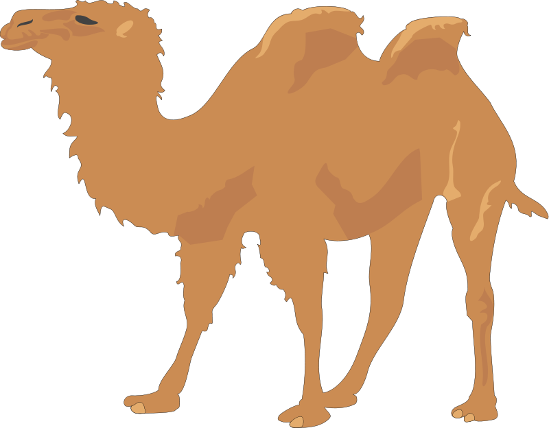free vector Camel 2