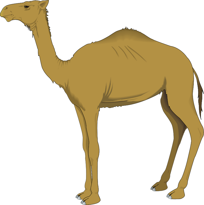 free vector Camel 3
