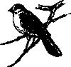free vector Canada Jay clip art