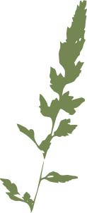 free vector Canary Grass clip art