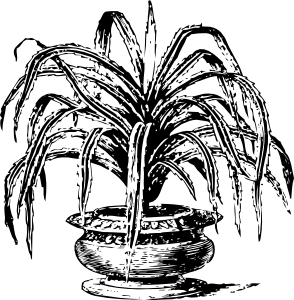 free vector Candelabrum Tree clip art