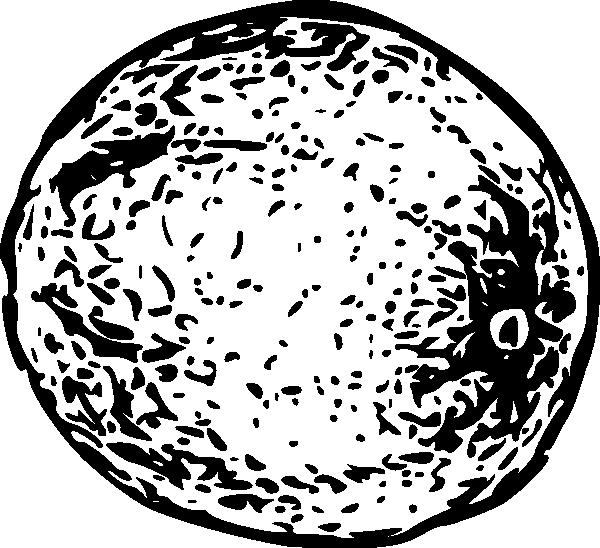 free vector Cantaloupe clip art