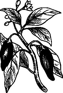 free vector Capsicum clip art