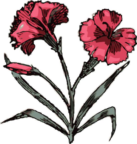 free vector Carnation clip art