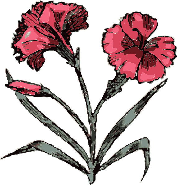 carnation flower clip art free vector 4vector rh 4vector com carnation clip art free clipart carnation flower