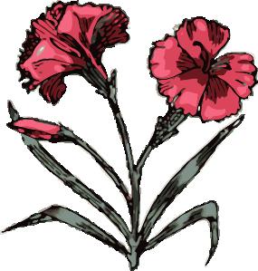 free vector Carnation Flower clip art