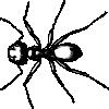 free vector Carpenter Ant clip art