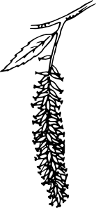 free vector Catkin clip art