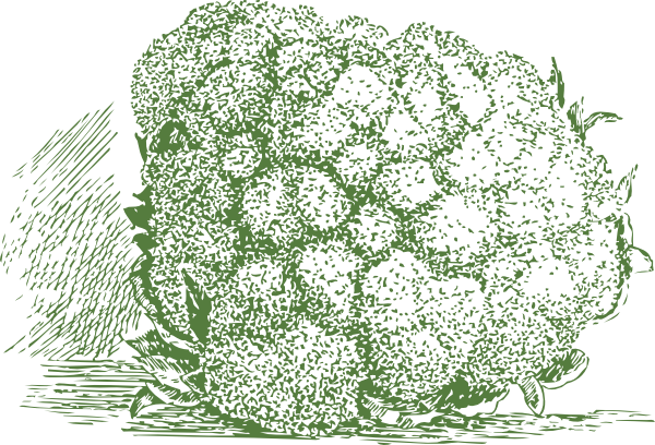 free vector Cauliflower Plant clip art