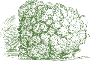 free vector Cauliflower Plant clip art