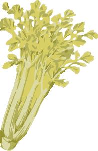 free vector Celery clip art