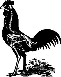 free vector Chicken Skeleton clip art