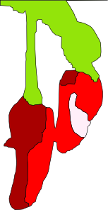 free vector Chillies clip art