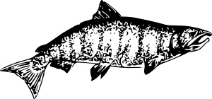 free vector Chinook Salmon clip art