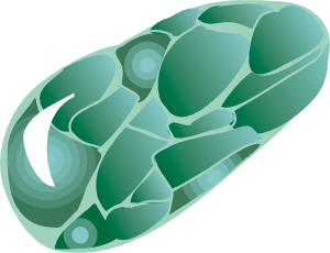 free vector Chlorastrolite Green Star Stone clip art