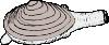 free vector Clam clip art 128278