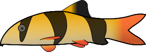 free vector Clown Loach clip art