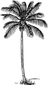 free vector Coconut Palm clip art