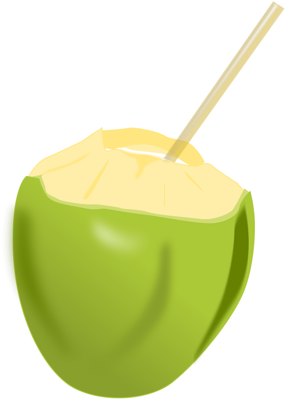 free vector Coconut