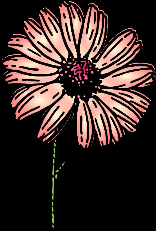 free vector Colored daisy 2