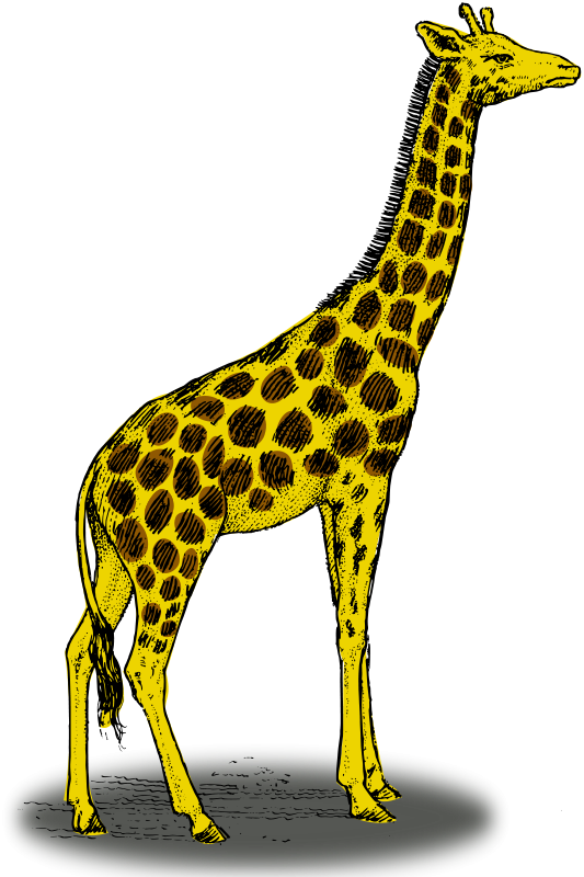 free vector Colored giraffe