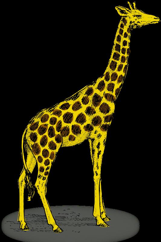 Colored giraffe Free Vector / 4Vector