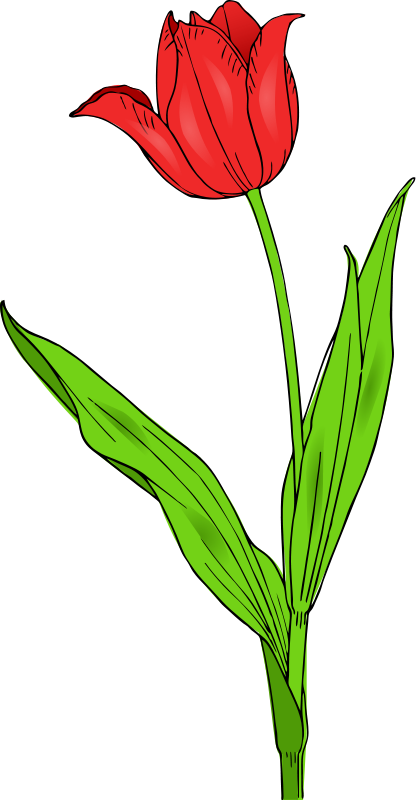 free vector Colored tulip