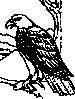 free vector Coloring Book Bald Eagle clip art