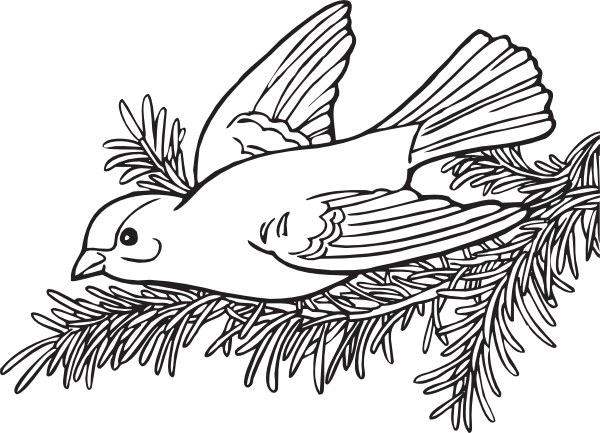 coloring book willow goldfinch clip art free vector    4vector