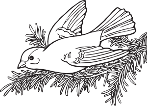 free vector Coloring Book Willow Goldfinch clip art