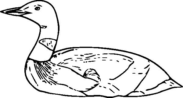 free vector Common Loon clip art