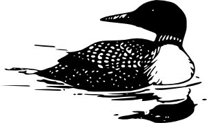 free vector Common Loon clip art