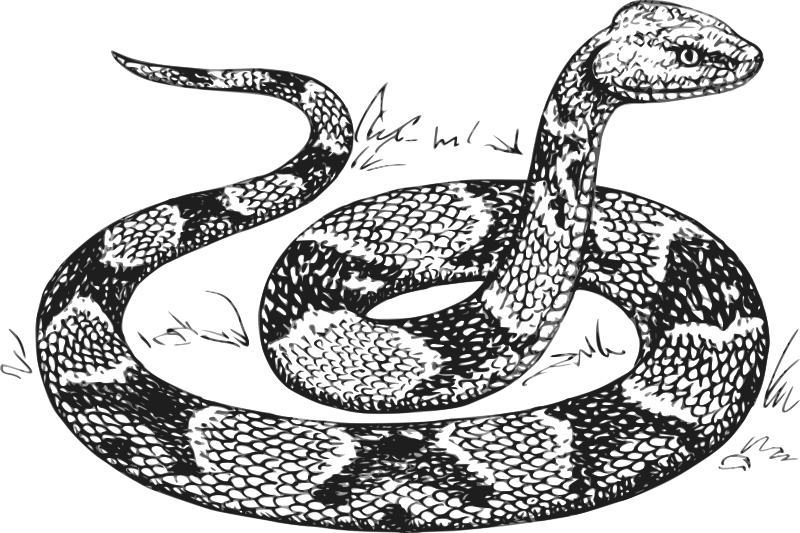 free vector Copperhead grayscale