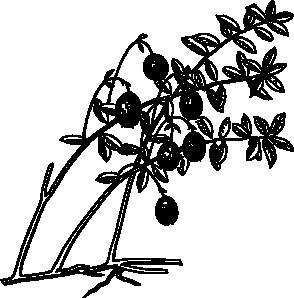 free vector Cranberry clip art