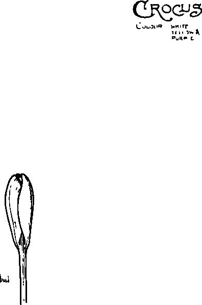 free vector Crocus Closed Flower clip art