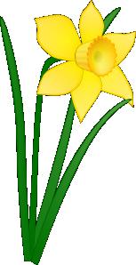 free vector Daffodil clip art