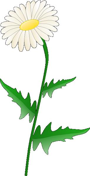free vector Daisy clip art