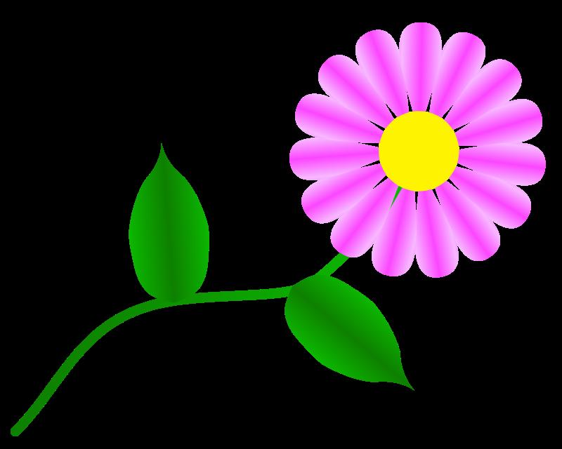 free vector Daisy Fuchsia