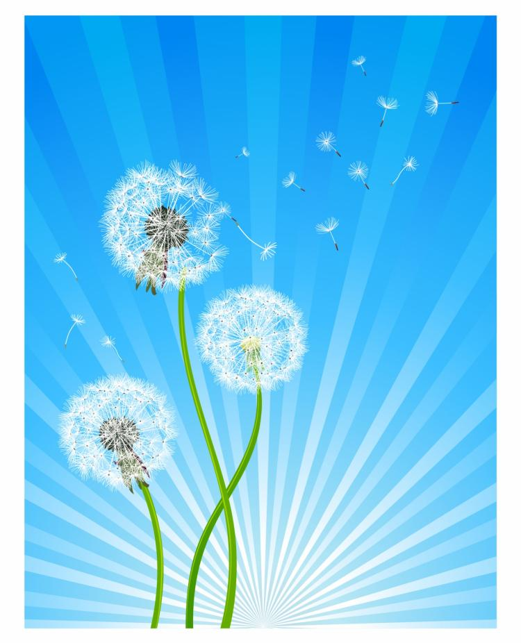 free vector Dandelion flowers