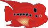 free vector Danz Flowerhorn Fish clip art