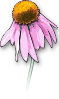 free vector Dead Flower clip art