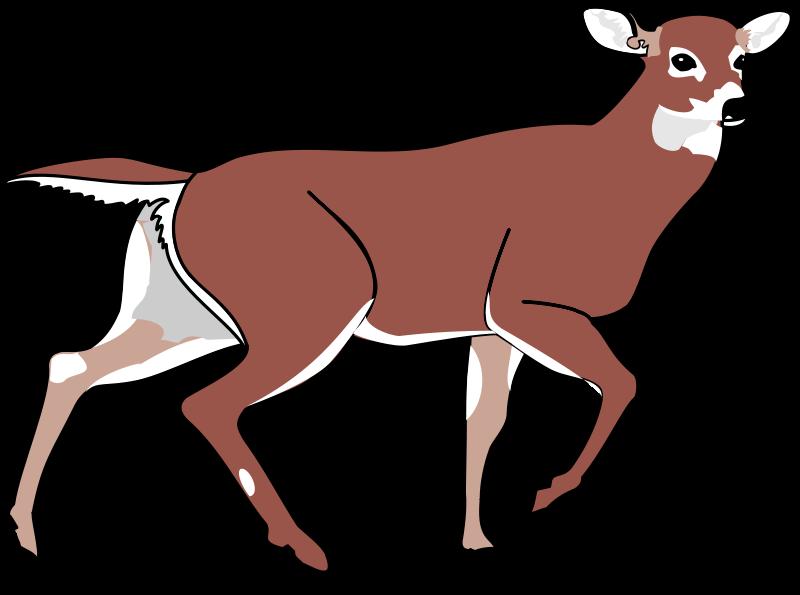 free vector Deer 2