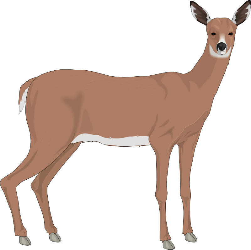 free vector Deer 3