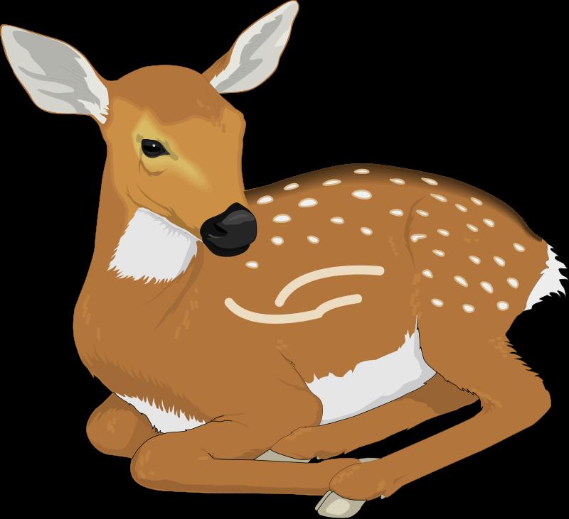 free vector Deer 6