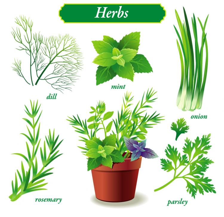 free vector Delicate green vegetables vector