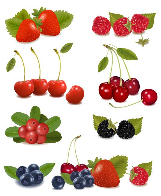 free vector Delicious fruit 01 vector