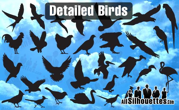 free vector Detailed Vector Birds